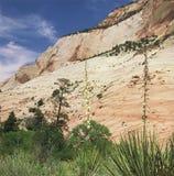 Zion National Park - Utah Arkivbilder
