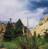 Zion National Park - Utah Fotografering för Bildbyråer