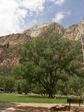 Zion National Park In Utah los E.E.U.U. Imagenes de archivo