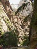 Zion National Park In Utah los E.E.U.U. Fotos de archivo libres de regalías