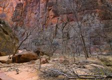Zion National Park (Utah, Usa) Royalty Free Stock Images