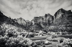 Zion National Park View in black and white. Black and white view of Zion National Park with cactuses in the foreground, on Mount Camel Highway before Springville Stock Photo