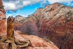 Zion National Park with a view  high above the valley floor Royalty Free Stock Photos