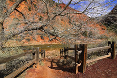 Zion National Park and The Virgin River in spring Stock Images