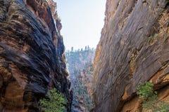 Zion nationalpark Royaltyfri Fotografi