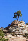 Zion Nationalpark. Lizenzfreie Stockfotos