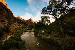 Zion nationalpark Arkivfoton