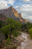 Zion - nationalpark Royaltyfria Bilder