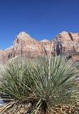 Zion nationalpark, Utah, USA Royaltyfria Bilder