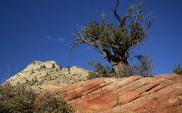 Zion Nationalpark, Utah, USA Lizenzfreie Stockfotos