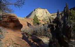 Zion Nationalpark, Utah, USA Stockbild