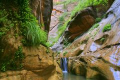 Zion Orderville Canyon. Zion National Park Royalty Free Stock Images