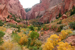 Zion Park Fall Colors Stock Photo