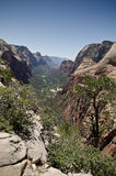 Zion park landscape Royalty Free Stock Photo