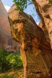 Zion park narodowy Fotografia Royalty Free