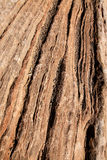 Zion sandstone Stock Image