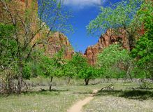Zion Spring. Image of the beautiful Zion Canyon  basking in sunlight on a glorious spring afternoon Stock Photography