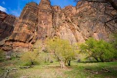 Zion Trees e scogliera immagine stock