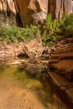 Zion Upper Emerald Pond Stock Image