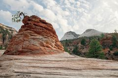 Zion Stock Images