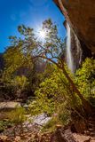 Zion Waterfall Royalty Free Stock Photo
