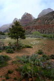 Zions Canyon with Rain Clouds Storms Royalty Free Stock Photos