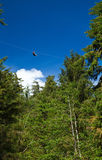 Zip line. Person on a zip line high above the trees stock image