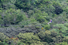 Zip line canopy tours in Costa Rica Stock Photography