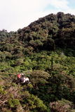 Zip-lining above rainforest Stock Photos