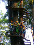 Zip lining chiang mai Thailand. Zip lining chiang mai stairs around large tree with zip liners in full protective harness and gear stock image