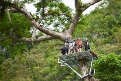 Zipline adventure On tree Royalty Free Stock Photography