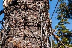 Ziplinie Drähte um Baumstamm Stockfoto