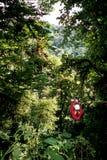 ziplining森林的雨 库存图片