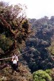 ziplining的雨林 库存照片