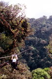 Ziplining dans la forêt humide Photos stock