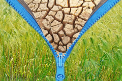 Zipper with cracked soil and crop. Zipper with cracked soil ground texture, over freshness crop Stock Photography