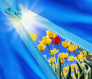 Zipper opens a field of flowers Stock Photos