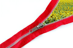 Zipper and sunflowers. A closeup of a zipper with a sunflowers' field royalty free stock photography