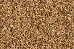 Zira black spice as a background, natural seasoning texture stock photos