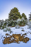 Ziria mountain fir trees covered with snow on a winter day, South Peloponnese, Greece Stock Photography
