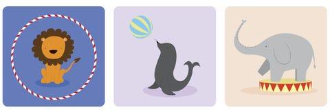 Zirkus-Tiere Lizenzfreies Stockfoto