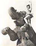 Zirkusausführender, der auf Elefanten aufwirft Lizenzfreie Stockbilder