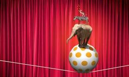 Zirkustiere Stockbild