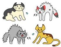 Zischenkatzen, erschrockene Katzen Stockfotografie