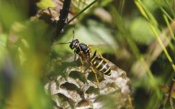Zit op nest in het midden van groen gras royalty-vrije stock fotografie