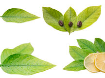 Zitrone, Blätter und Kaffeebohnen Stockfotos