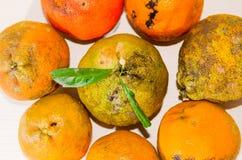 Zitrone: Draufsicht eines Bündels Rangpur-Kalkes Lizenzfreies Stockbild