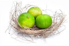 Zitrone drei im Nest. Lizenzfreies Stockbild