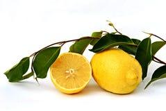 Zitrone mit Blättern Lizenzfreie Stockfotos
