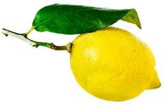Zitrone mit Blatt Stockfotos